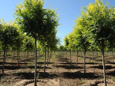 绿化苗木3