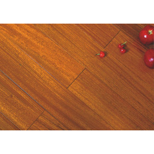 圆盘豆 (橙色)